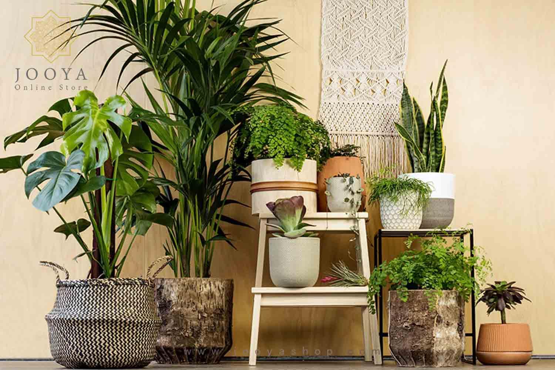 انواع گیاهان و عناصر طبیعی در دکوراسیون به سبک استوایی