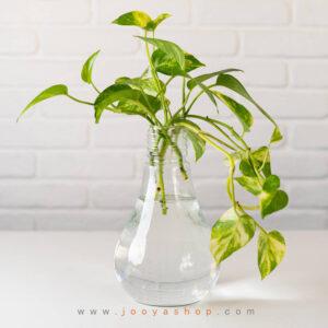 لامپ شیشه ای دکوراتیو